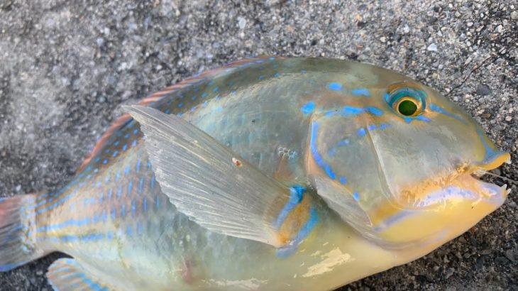 ゲキ濁りの海を調査 沖縄釣り フカセ