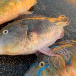 南部ポイント調査したよ  沖縄釣り フカセ