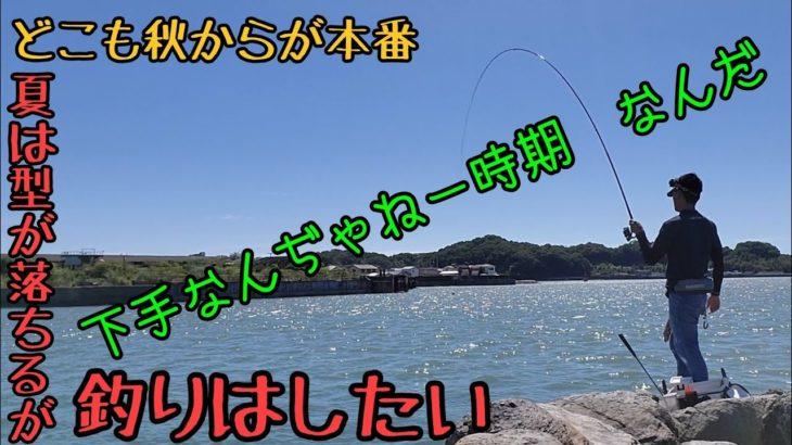 【フカセ釣り】磯シーズン突入前に肩慣らし釣行