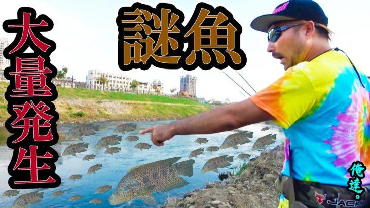街中で7800円の謎魚が湧きまくってボコボコ釣れる!