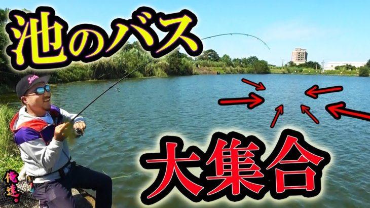 池中のバスを集める禁断の魔法【台湾釣行】