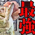 霞水系最強喰わせルアーでトップウォーターゲーム【霞ヶ浦/バス釣り】