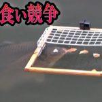 巨大魚まみれの川に【パン食い競争マシーン】投入してみた。