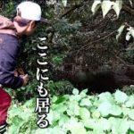 【バス釣り】秋は・・『巻と撃で』エンジョイフィッシング!