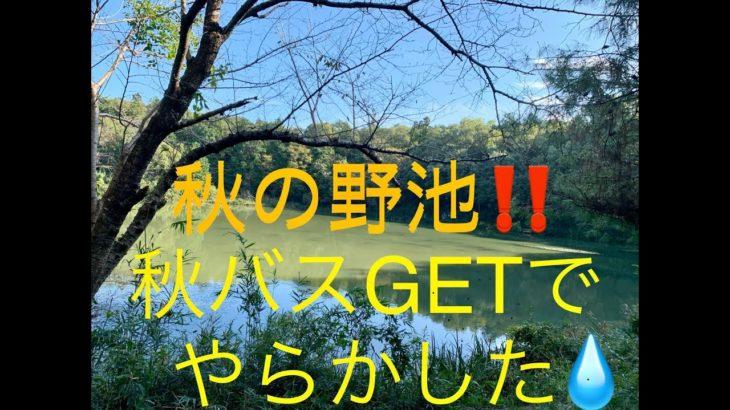 秋のバス釣り‼️埼玉県 小規模野池で確実に釣る方法✨