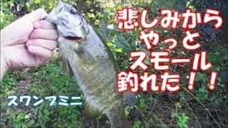 【バス釣り】悲しみからの魚!スモールマウスバス