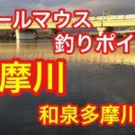 多摩川  和泉多摩川  バス釣りポイント  スモールマウスバス  ブラックバス