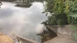 桂大池 ブラックバス釣りポイント 岡崎市 バス釣り 愛知県