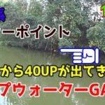 11月 まだまだトップで出る霞ヶ浦。 バス釣り 霞水系