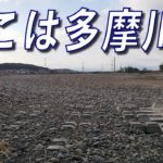 【多摩川 バス釣り】台風19号で多摩川が消滅?スモールマウスバスはどこに行ったのか【ヒジリ釣行記】