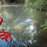 ああ久米島の川ですね【釣り方徹底解説 2019久米島#3】