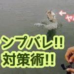【5分で答える!】ジャンプバレ対策術【琵琶湖バス釣り】