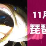 バス釣り/琵琶湖デカバス/ハニタス開発日記#5