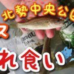 【ブラックバス】北勢中央公園【三重県四日市市】GEKIMORA
