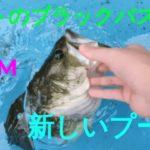 ペットのブラックバスをプールに入れました!!! My Pet Bass Has A New Pool Pepperchan