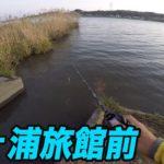 霞ヶ浦旅館前!!北利根川 メジャー P 調査!(11/12)ブラックバス釣り