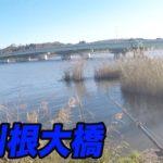 北利根大橋周辺!!北利根川 メジャー P 調査!(11/12)ブラックバス釣り