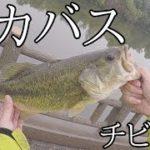 【バス釣り】緊急SOS!池のバスぜんぶ釣る大作戦【バイト集】