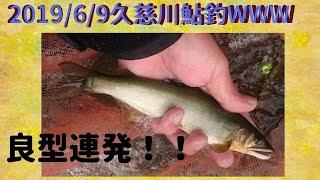 2019年06月09日 久慈川鮎釣り 良形連発!