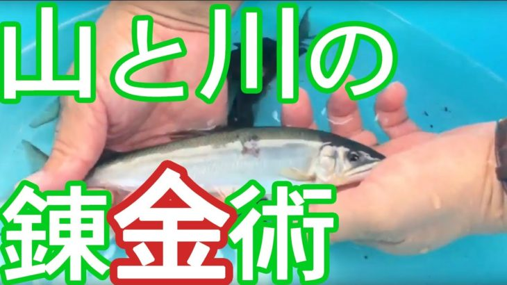シシ肉と天然鮎を物々交換する原始的で柔軟な会合が方田舎で開催されました。