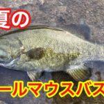 真夏のスモールマウスバス釣りは人間も厳しい