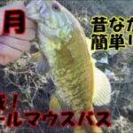 【バス釣り】昔ながらのリグは釣れるぞ!