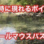 増水時に現れる スモールマウスバス釣りポイント