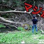 【バス釣り】何匹いるの?巨大な倒木の中に奴らが潜んでいただと!