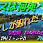 ブラックバスは何処へ? なんとアレが釣れた!? ルアーフィッシング 奈良県 ほのぼの公園 加明池 新池
