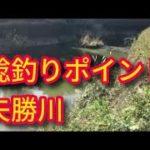 ナマズ釣りポイント 矢勝川と阿久比川の合流地点付近 愛知鯰釣りスポット