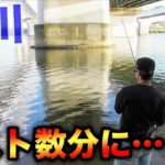 【バス釣り】ラストのラストに!淀川の橋下には釣れる要素がいっぱい