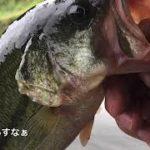 放流後の管理釣り場はパラダイス!?【バス釣り】【管理釣り場】【釣りパラダイス】