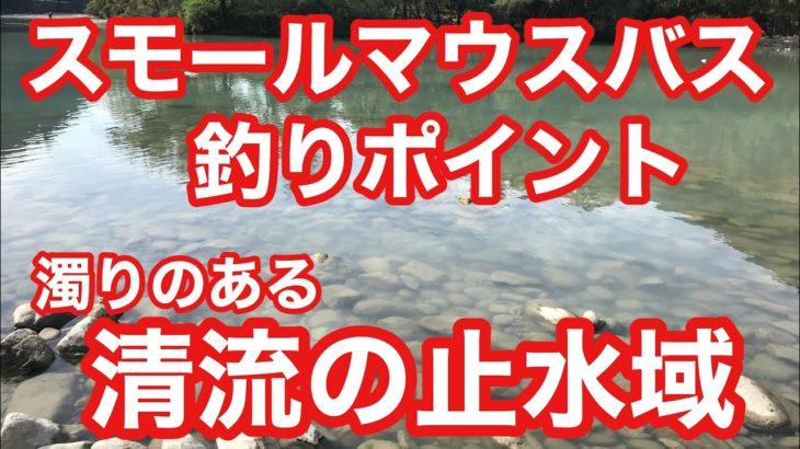 濁りのある清流の止水域 スモールマウスバス釣りポイント