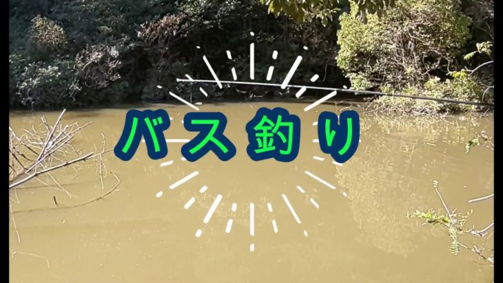 バス釣り☆誰でも釣れる池で(*'ω'*)