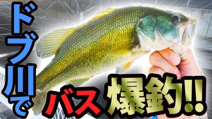 三重県のドブ川でバス釣り またまた爆釣した!!!