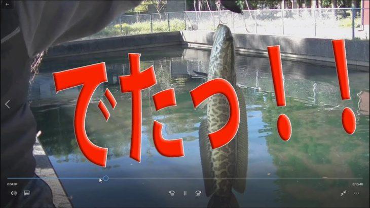 【釣り】ブラックバス釣りいったら…