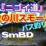 yasu 晩秋の『にごい&ニゴイ…時々スモール』バス釣り/川スモール/2019年11月