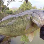 『11月バス釣り』 池は小さいが魚はデカい part2