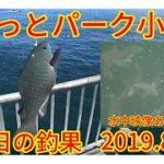 海釣り公園とっとパーク小島釣果情報 2019.8.5 【水中映像】あります。