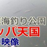 オリジナルメーカー海釣り公園 サッパ天国??水中を撮影してみた【市原海釣り公園】2019年10月8日 水中映像