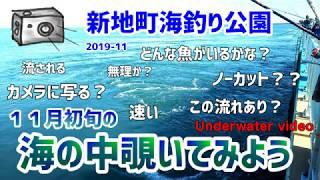 新地町海釣り公園 水中カメラで海の中覗いてみよう Let's take a look at the underwater video