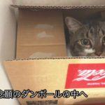 海釣り公園とネコ#cat#sea#japan
