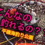 【ヒラスズキ】海釣り公園で!⁈垂水の海は最高潮☆fishingmax垂水店2019/11/08