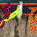 【垂水周辺】この時期アジは釣れるのか⁉fishingmax垂水店2019/12/07