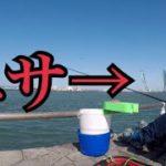 海釣り公園で釣れた小魚をエサにして大物を狙う!