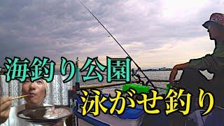 海釣り公園で泳がせ釣りして大物を狙う!やっぱり刺身だよね。
