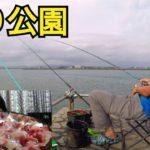 海釣り公園で泳がせ釣りで釣って食べる。
