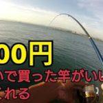 海釣り公園で釣りしてたら予想外の大物が!釣った魚は料理して食べました。