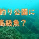 海釣り公園の海底に潜む高級魚を追う!下津ピアーランド水中映像