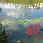 ダイソーのワームでバス釣り!野池で出たァーーー!!冬のブラックバス攻略!